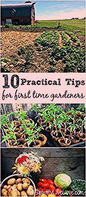 Photo of Gärtnern zu Händen Greenhorn leichtgewichtig gemacht Wenn Sie Ihren ersten Grünanlage beg,  #…