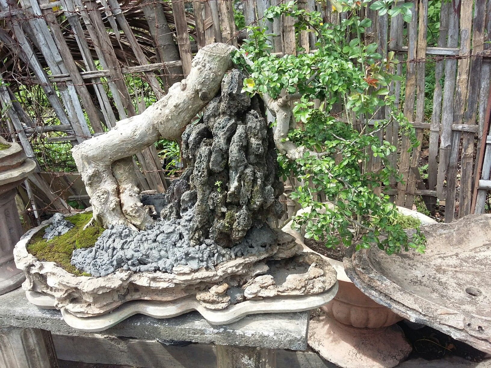 Bonsai Serut Air Terjun