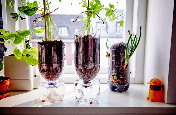 Les Bouteilles En Plastique Pet Sont Des Pots De Fleur Parfaits