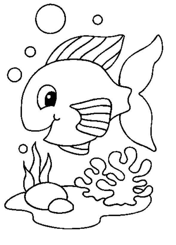Animals Fish print picture 56 gustos Pinterest Fish print and
