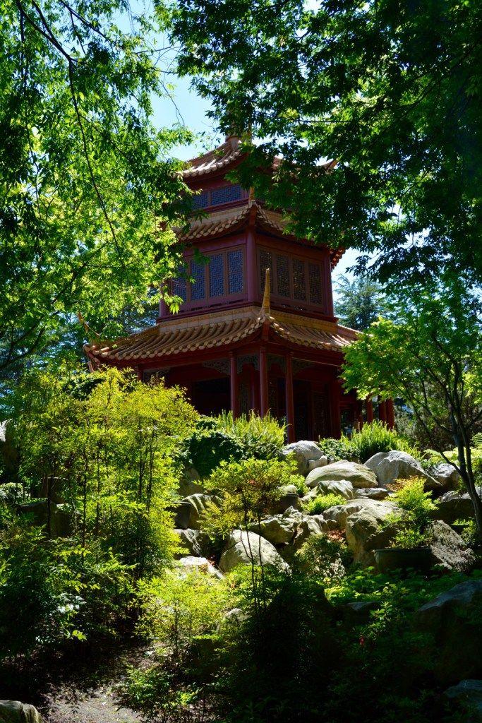 The Chinese Garden of Friendship | Chinese garden, Sydney australia ...
