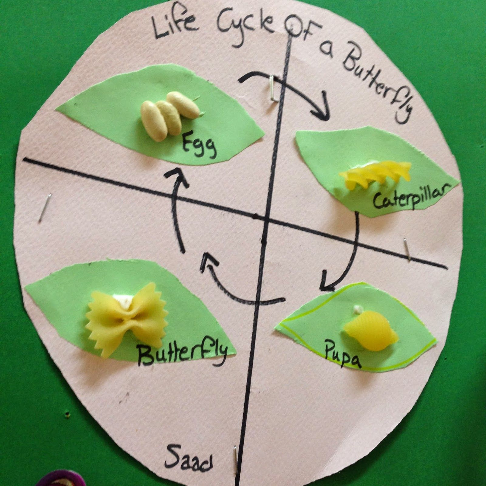 Makassed Ksps Life Cycle Of A Butterfly Pasta Activity