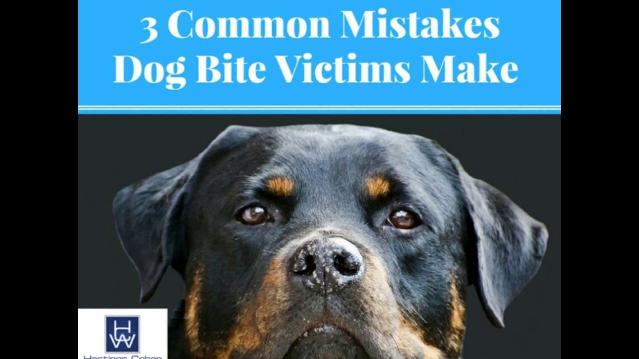 Pin On Dog Bite Injuries Hastings Cohan Walsh Llp Connecticut Dog Bite Injury Attorneys