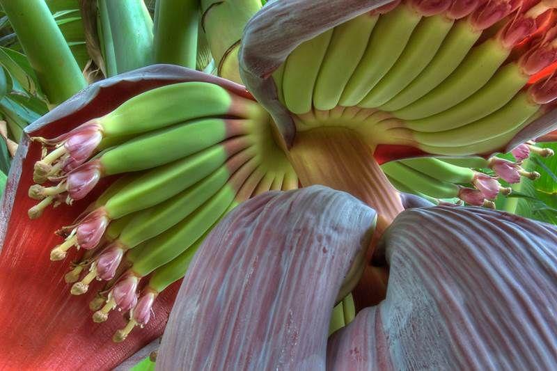 Viete, ako vyzerá vaše obľúbené ovocie vo svojom prirodzenom prostredí? Pozrite…