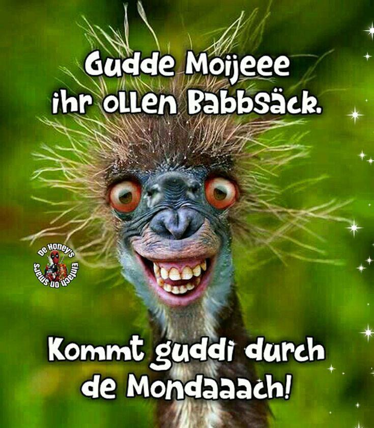 Gutenmorgen Morschen Gudde Moije Moinsen Lustigespruche Gutenmorgen Guten Morgen Lustig Guten Morgen Witzig Lustige Guten Morgen Spruche