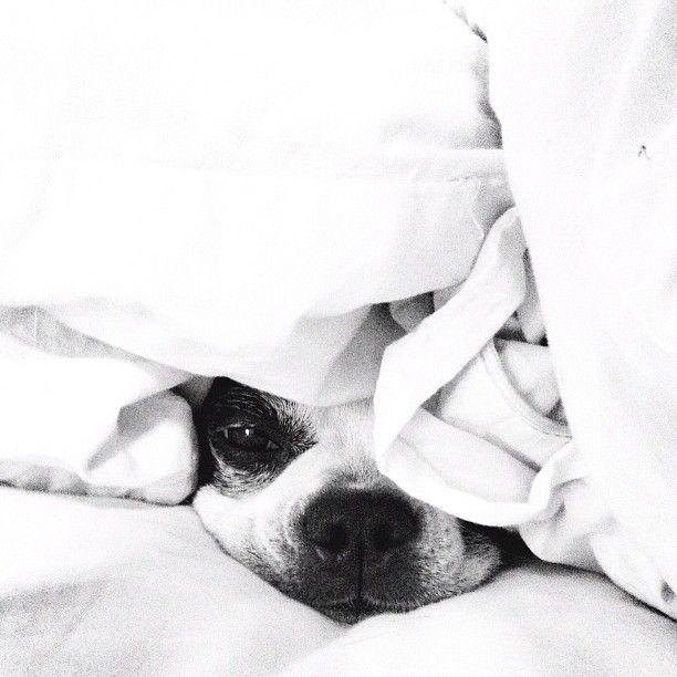 #Dog #Cute #Puppy #Pug
