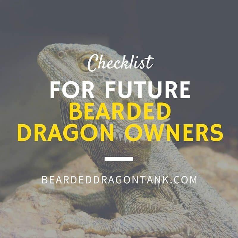 Ahh >> Bearded Dragon Leash Petco #nice | Beardies  | Bearded dragon