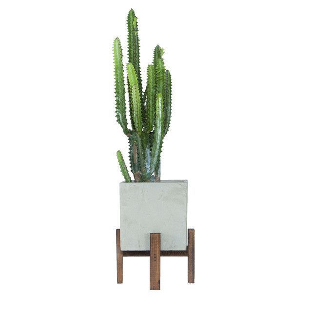 Cement Flowerpot For Green Plants and Succulents