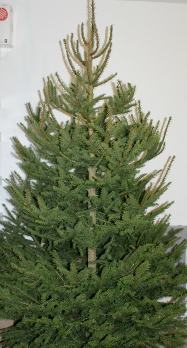 Real vs Fake Christmas Trees: The Ultimate Debate | Fake ...
