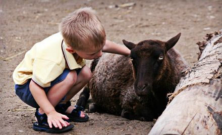 Love Groupon? Request a deal! Maplewood farm, Acre, Zoo