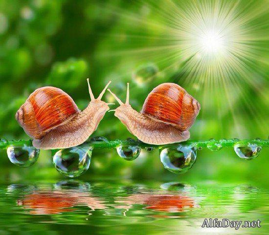 Улитка фото - растровый клипарт | Snail, Animals, Animal ...