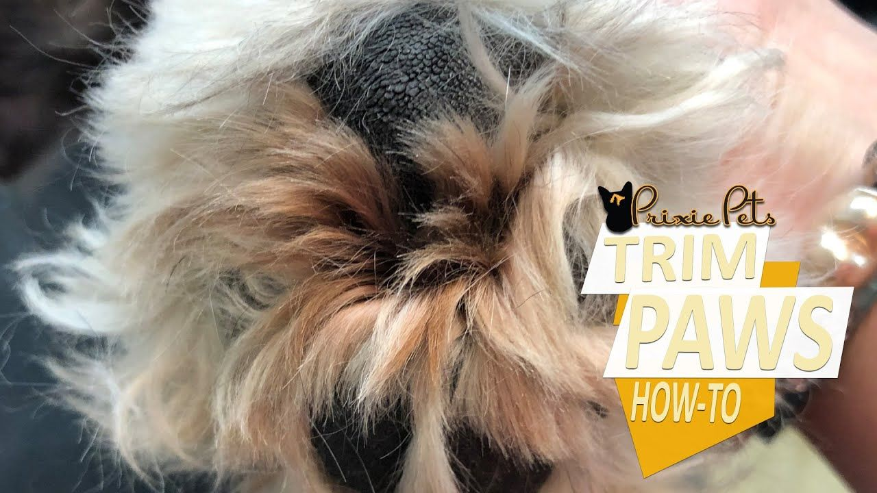 Dog Paw Pads How To Remove Hair Between Toes Hairy Dog Dog Paw Pads Dog Paws