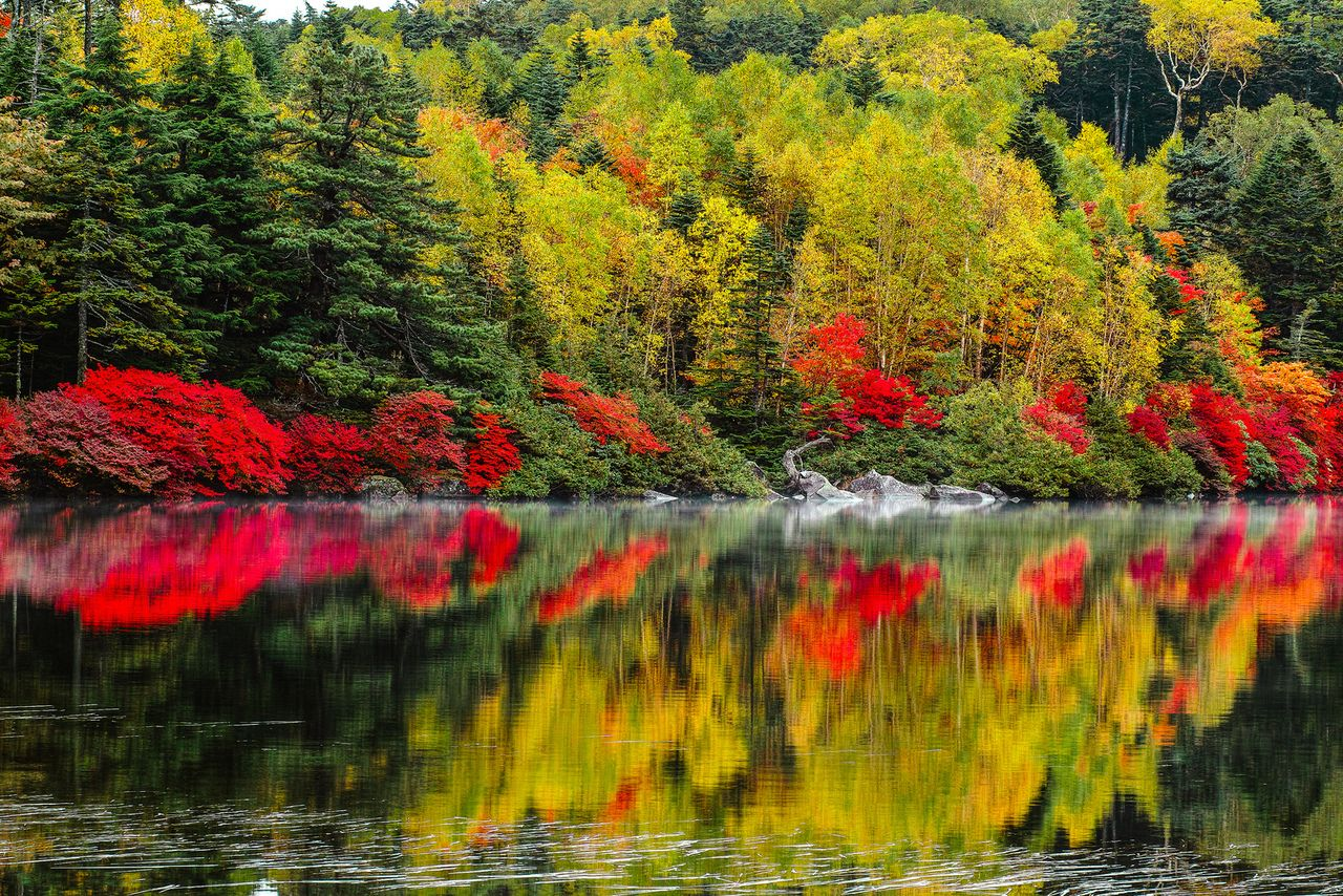 Autumn Colors Shimmering Color Cool Nature Pinterest