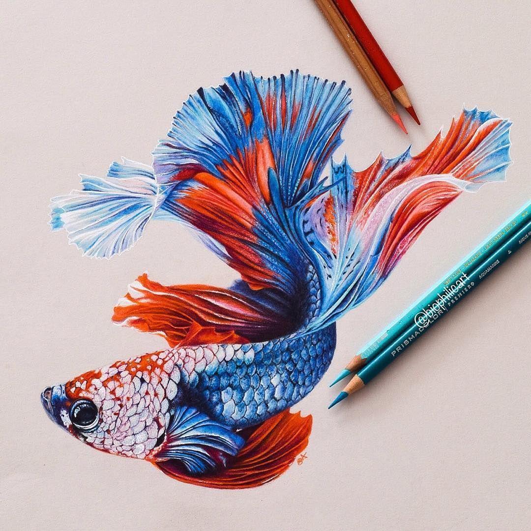 Instagram Fish Drawings Color Pencil Art Color Pencil Drawing