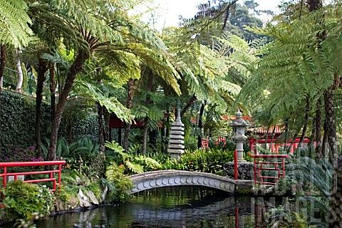 Monte Palace Koi Pond in Tropical Gardens ~ Funchai, Madeira ...