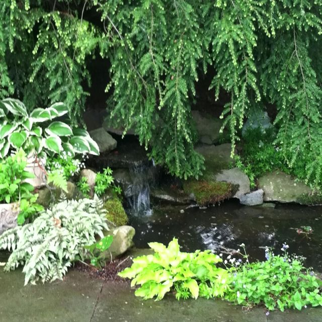 Epic pond with gentle waterfall and water lilies. | Ponds ... |Gentle Waterfall Pond