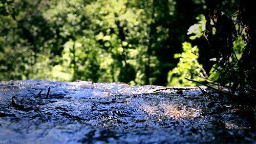 ⓅⒾⒸ ⓉⓇⒾⓅ — Forest —  Pixodium http://pixodium.com/pix--forest_space--57