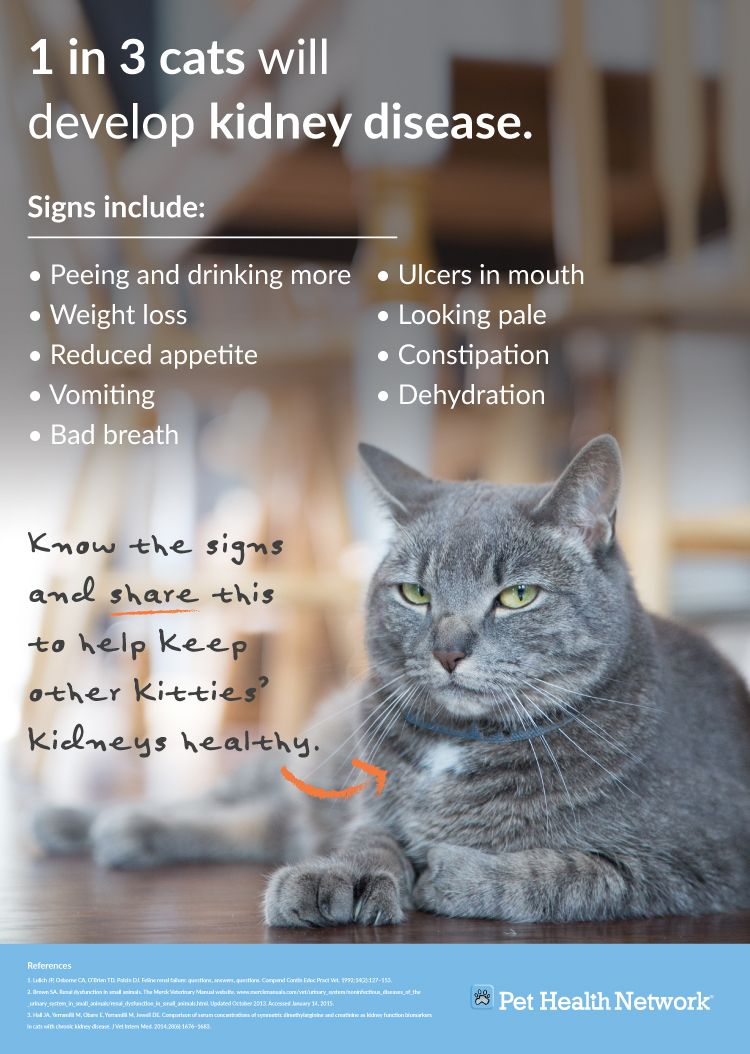 what to feed cats with kidney failure
