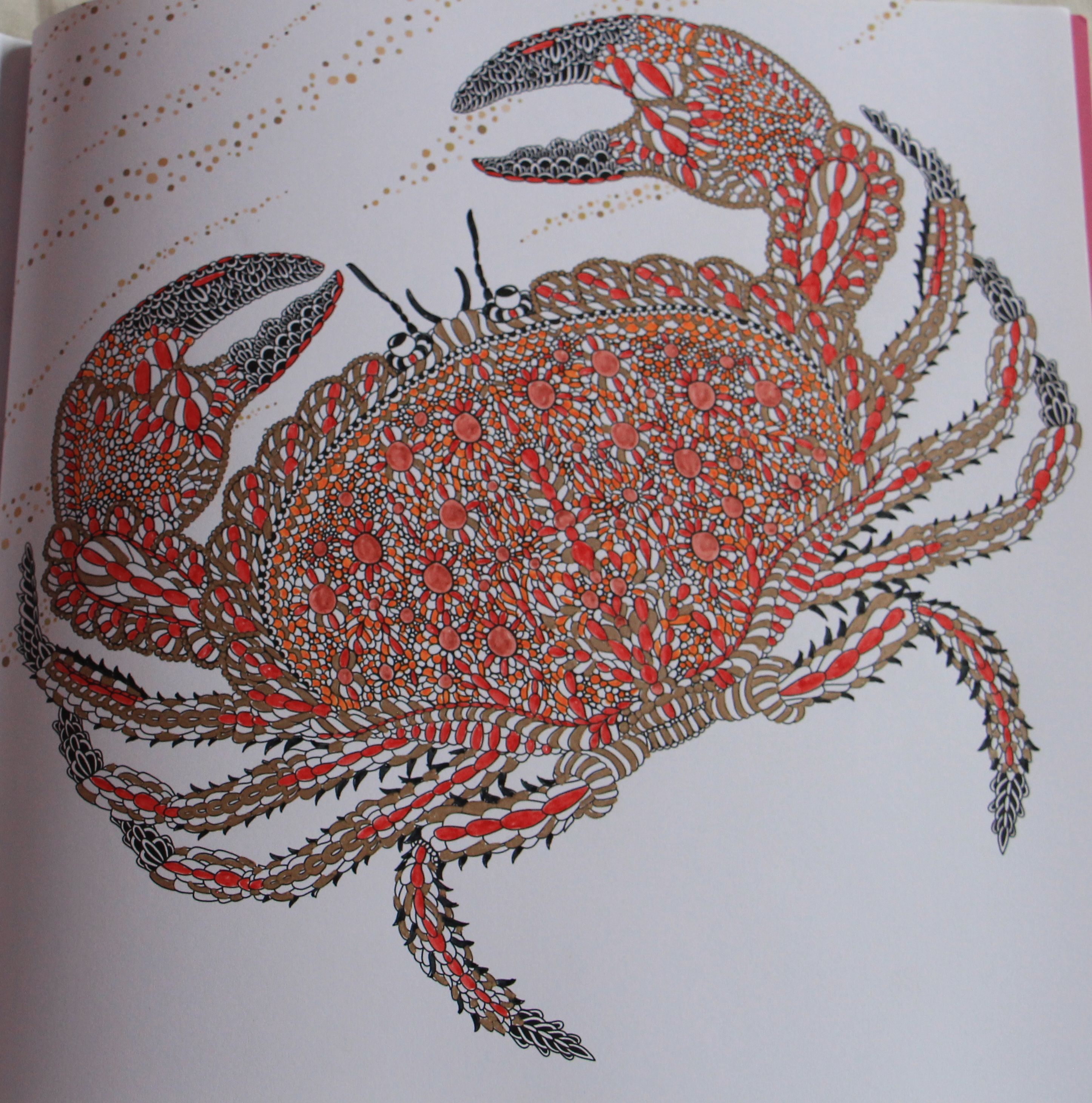 A Crab taken from \