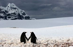 <3 <3 <3 penguins are together for life. just another reason why i find them so adorable!