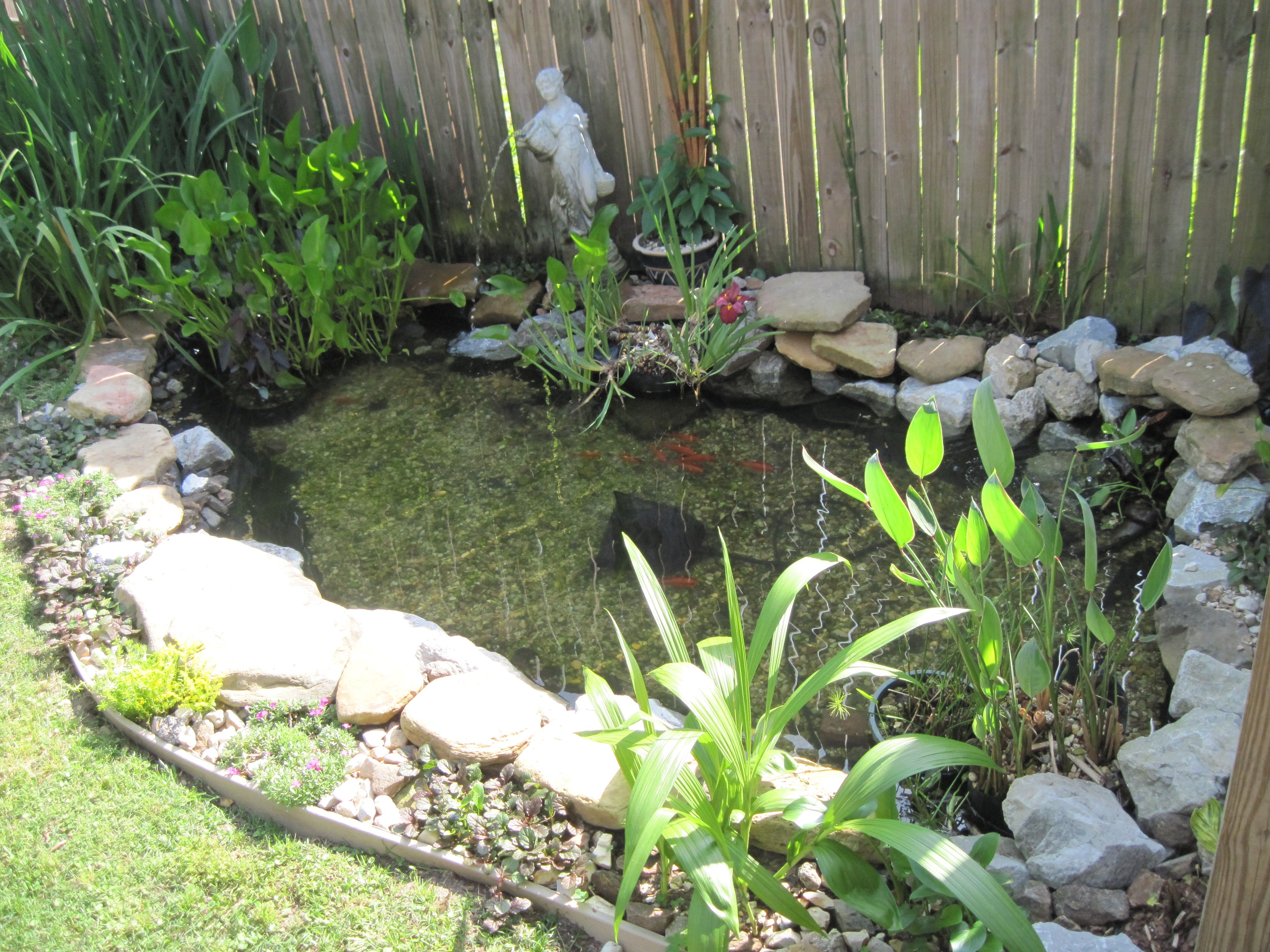 My goldfish pond from my yard pinterest goldfish for Garden pond ideas