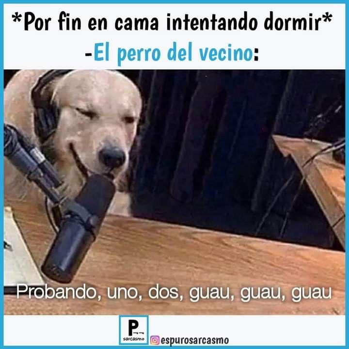 Pin By Jasmin Madison On Memes Memes Dogs Labrador Retriever