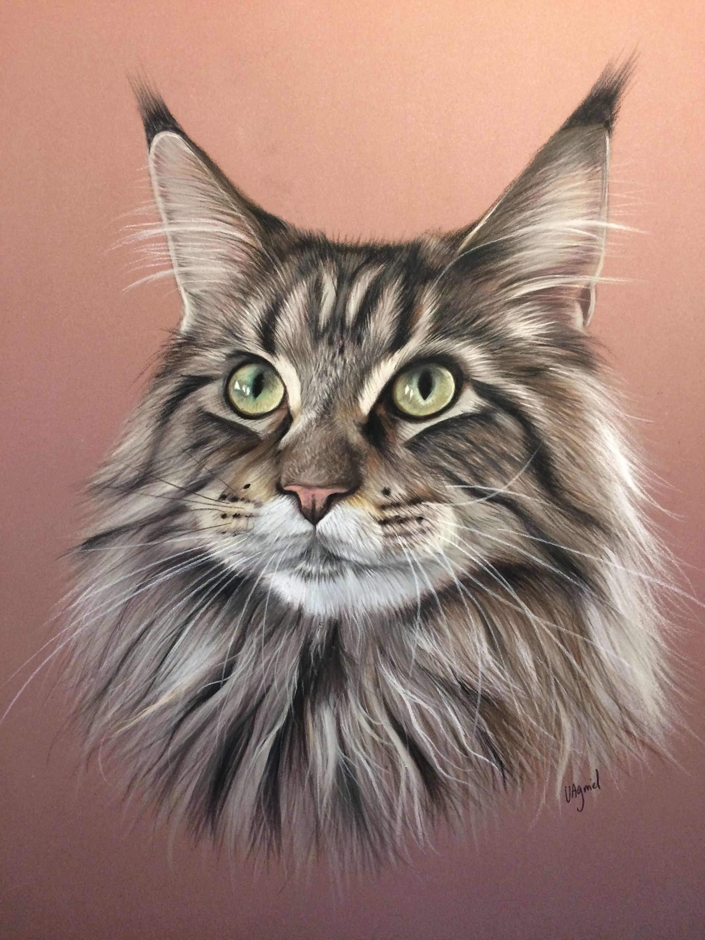 portrait animalier chat maine coon r alis au pastel. Black Bedroom Furniture Sets. Home Design Ideas