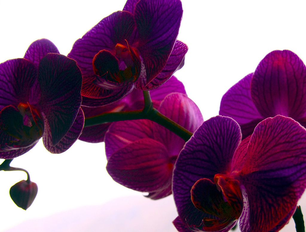 Purple Orchid In 2018 Orchids 2 Pinterest Orchids Flowers And