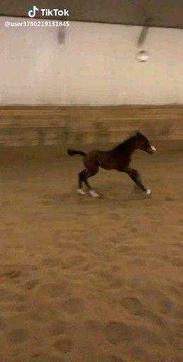 Tik Tok Video Funny Horse Memes Funny Horse Pictures Funny Horses