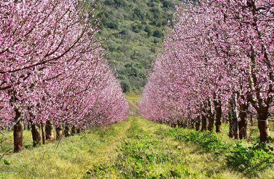 The Best Time To See Flowers In Tuscany Italy Tuscany Landscape Italy Landscape Tuscany Italy