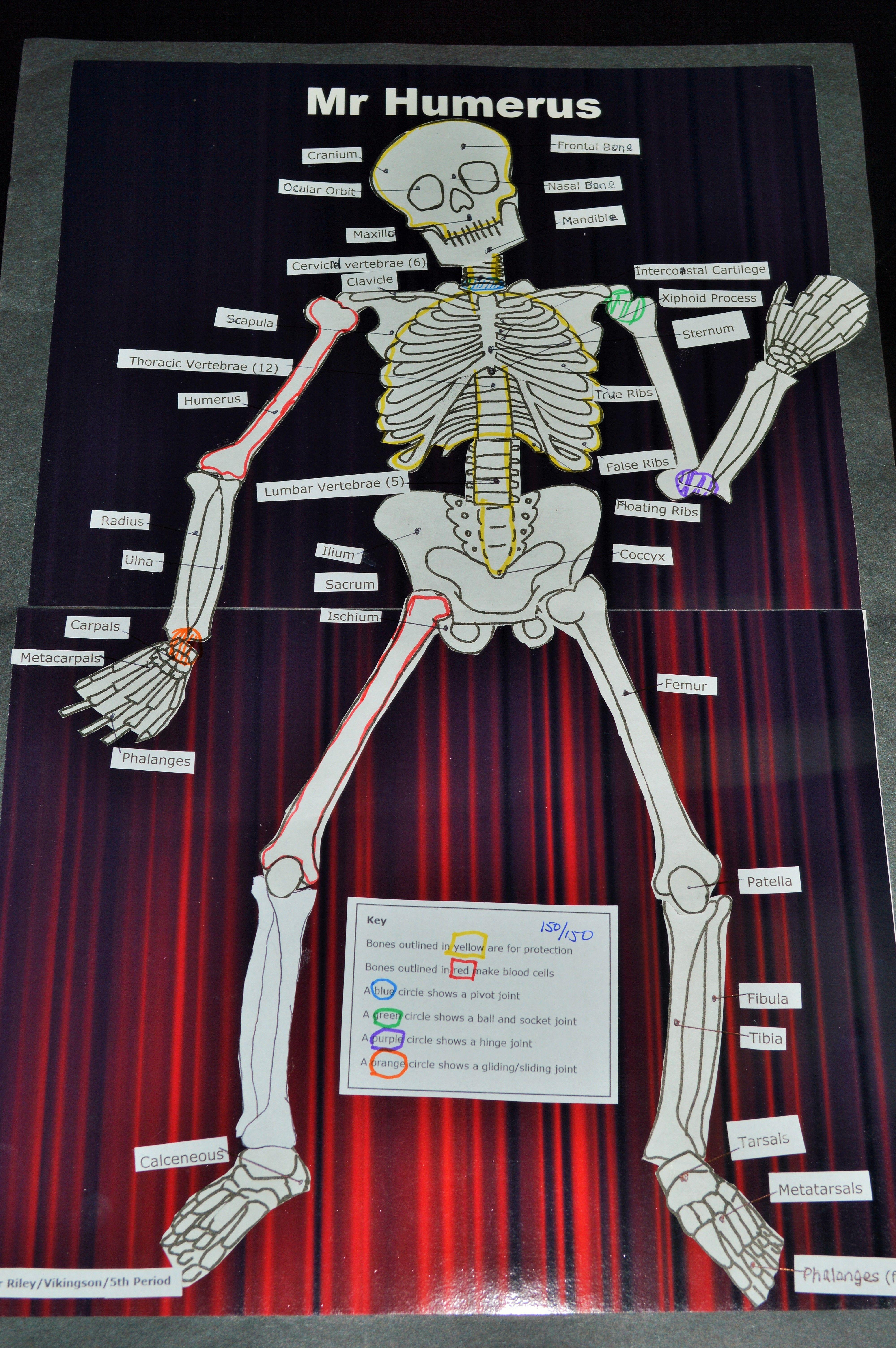 hight resolution of dem crazy bones skeleton project