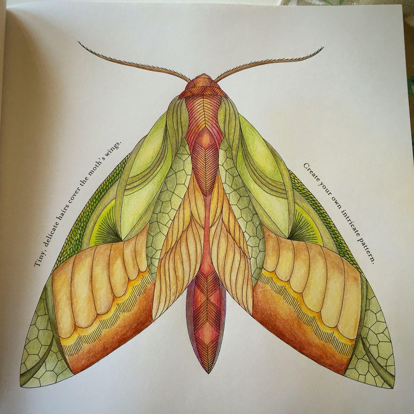 Moth By Sam Milliemarotta
