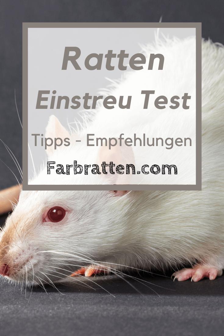 Pin Auf Ratten Haltung Farbratten Com