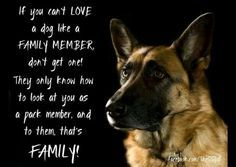 If you can't love a dog like a family member.... - Google Search