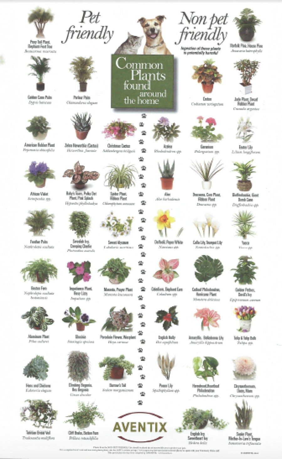 Pet-friendly plants and Toxic plants to pets | Gardening | Pinterest ...