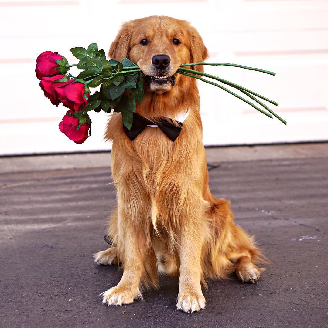 можно щенок с цветами в зубах фото скоро рынке увидим
