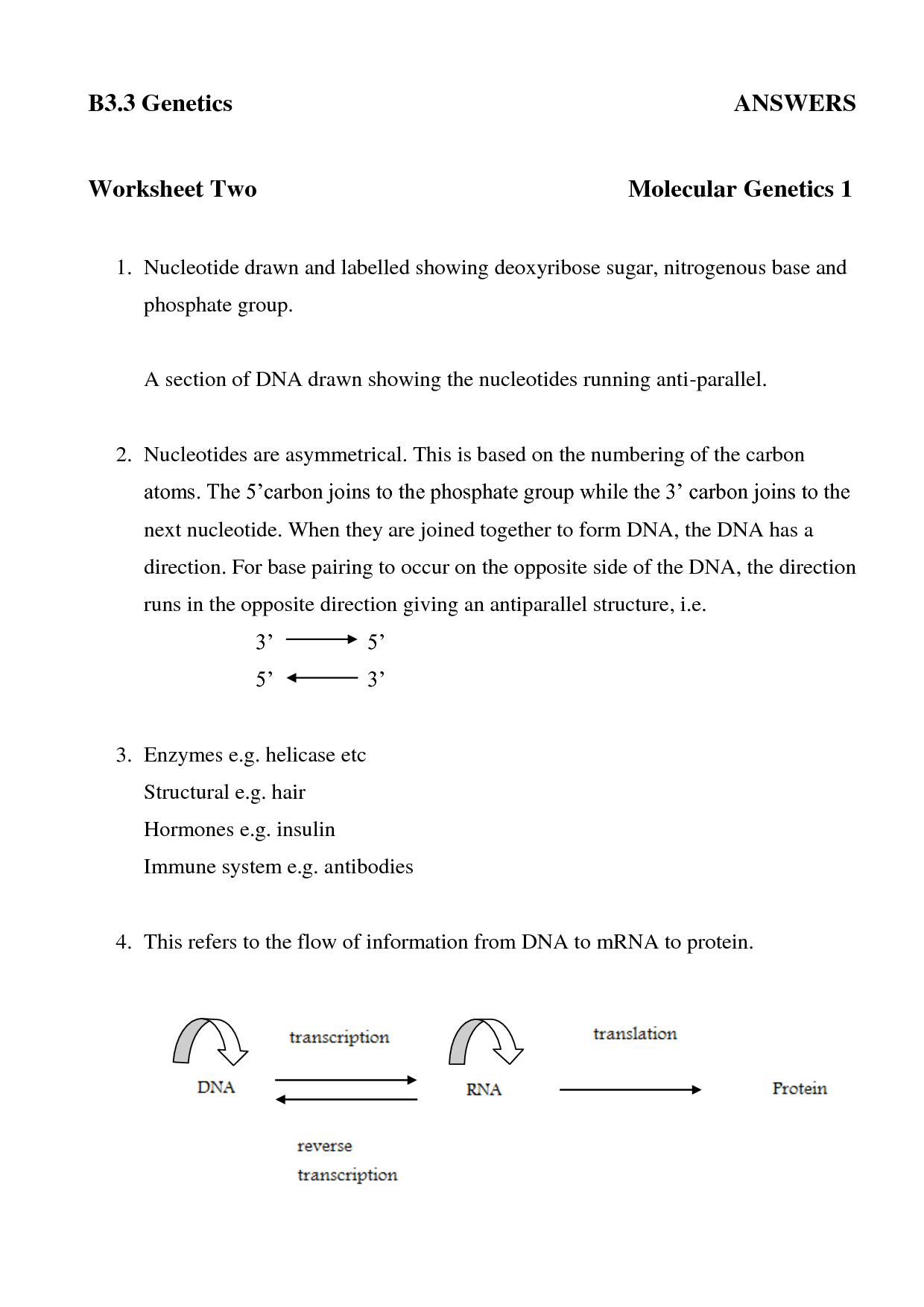 Answer Dna Transcription And Translation Worksheet