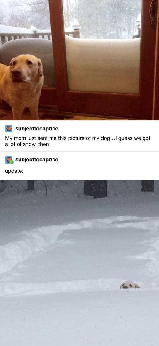 60 Top Tumblr Posts Page 2 Of 25 Funnynhumor Funny Animal Pictures Funny Animals Cute Funny Animals