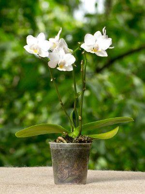 Przesadzanie Storczykow Orchid Centerpieces Wedding Orchids Orchid Arrangements