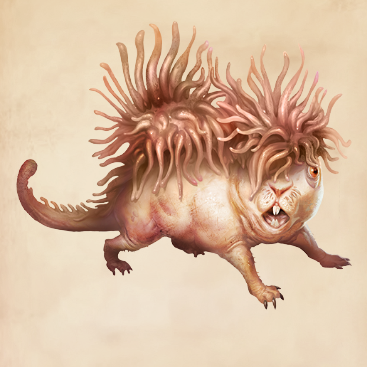 Murtlap Harry Potter Wiki Fandom Powered By Wikia Harry Potter Creatures Fantastic Beasts Creatures Harry Potter Fantastic Beasts