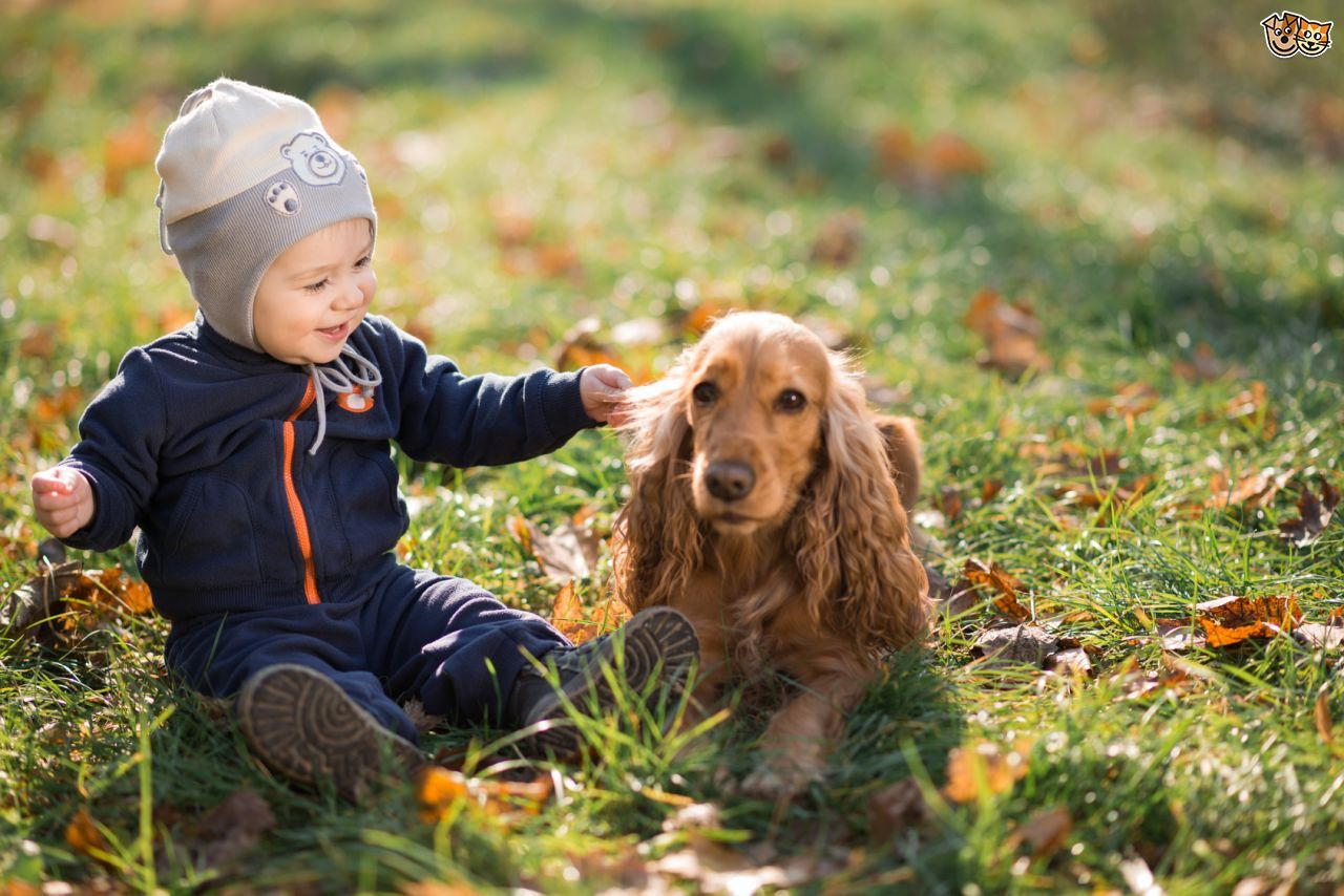 11 Best Pets For College Students Tips Before You Buy Dogs Kids Best Dogs For Kids Best Pets For Kids
