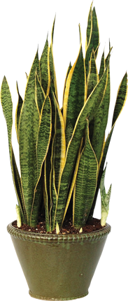 Tropical Houseplants: A Breath of Fresh Air | Tropical house ... on plants at sam's club, plants with white flowers, plants at kroger, plants inside home, plants at homegoods, plants that repel bugs and pests, plants at safeway, plants at menards, plants under evergreen trees, plants at publix, plants at kmart, plants at office depot, plants at michaels, plants that repel mosquitoes, plants at tj maxx, vines depot, plants at cvs, plants at ikea, plants at harris teeter, plants at disney,