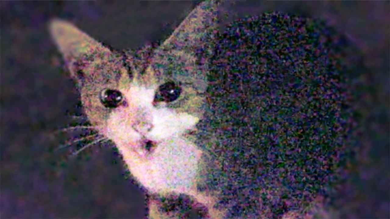 野良猫チョロちゃん 衝撃の再会 必死な鳴き声 ボス猫が体当たり Cute Stray Cat And Shocking Reencounter Diary Cats Tv 野良猫 猫 茶トラ猫