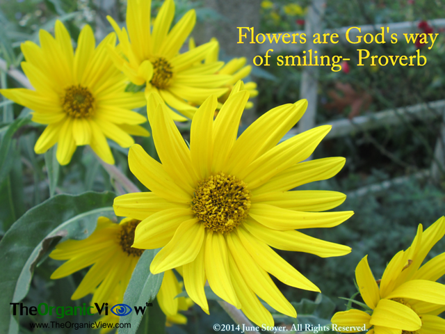 flowers are god s way of smiling proverb flower quotes