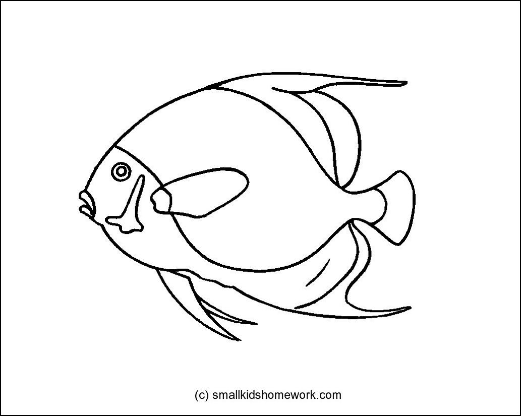 french angel fish outline picture outline pictures