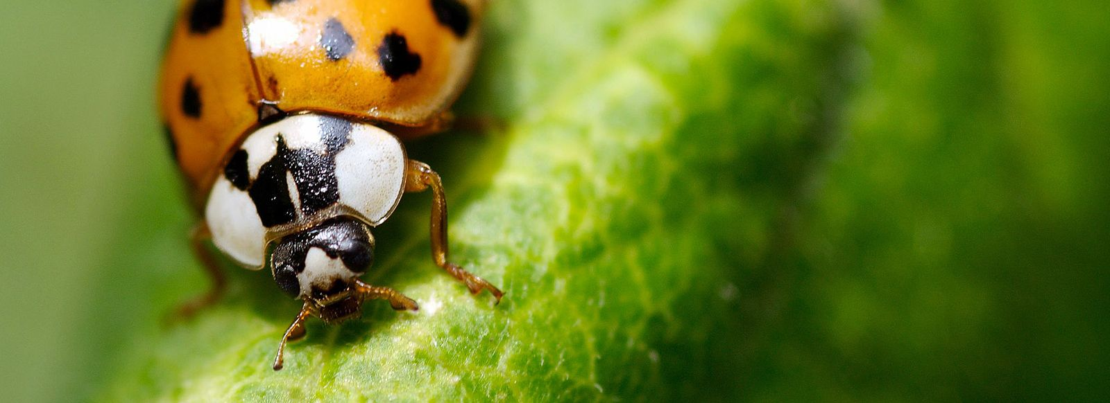 Marks Pest Control is a stateoftheart service provider