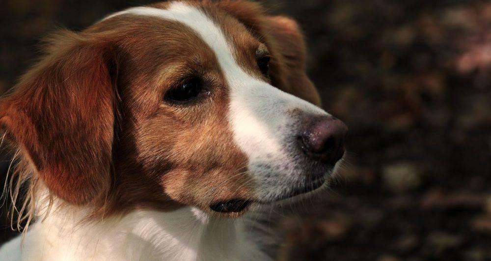 Buy Pet Supplies Online Buy Pets Dog Friendly Beach Dog Leg