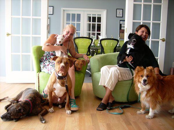 The Kolbe hounds.