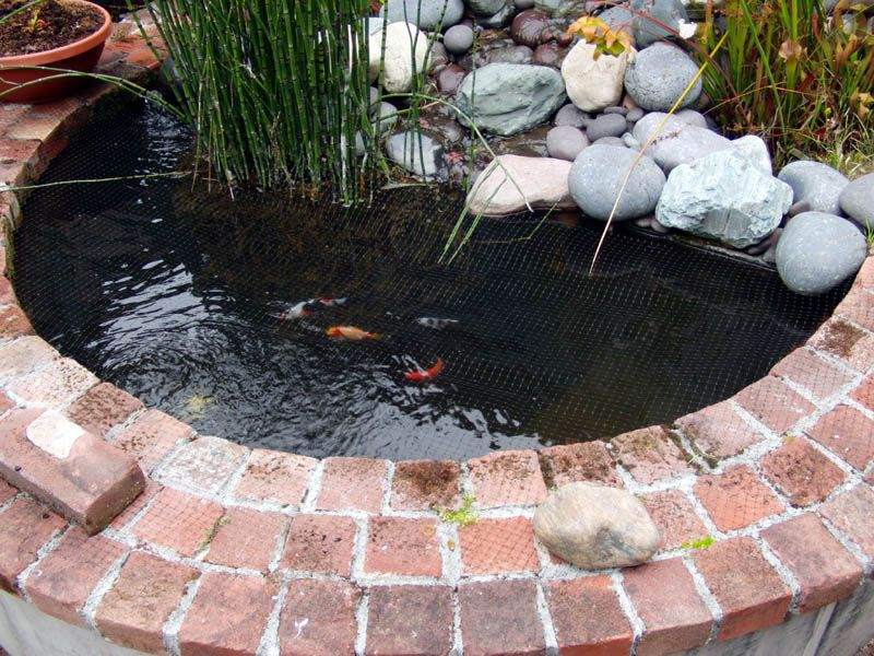 Small koi ponds newbie with small pond needs help group for Small koi pond