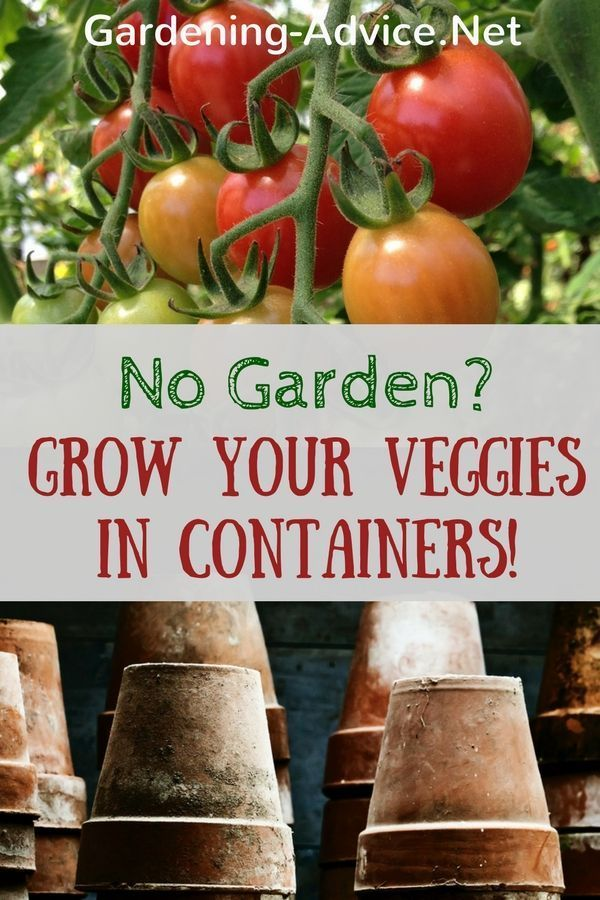 The beauty of growing vegetables in pots is that you can do this anywhere You dont have to own a big garden A patio rooftop garden or balcony will do A sunny corner in a...
